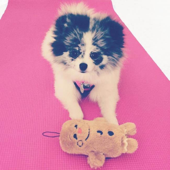 At-home gym essentials on joyfetti.com_Minty on yoga mat