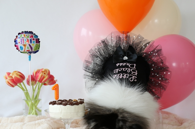 Minty's 1st Birthday Photo Shoot on mintymondays.com, Celebrating in my #LBD