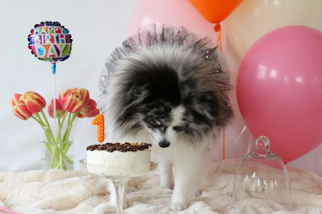 Minty's 1st Birthday Photo Shoot on mintymondays.com, Mmmm mmmm mmmm #birthdaycake