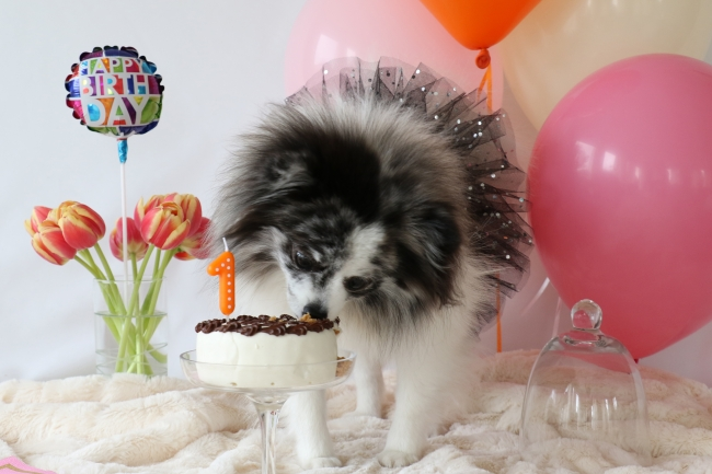 Minty's 1st Birthday Photo Shoot on mintymondays.com, found it