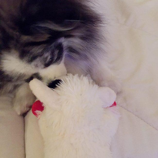Minty's 1st birthday recap_giving kisses to Lamb Chop on mintymondays.com #MintyMondays