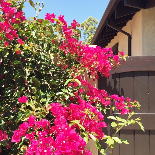 Pretty flowers #JOYFETTI