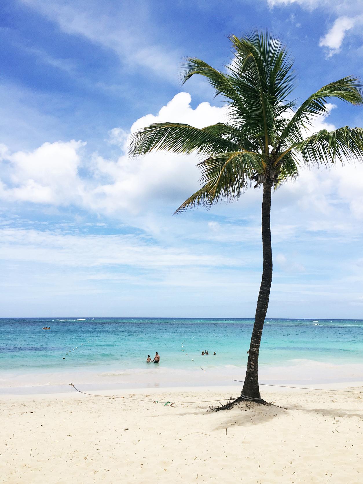 Sunday Splash_Dominican Republic, Puppy Love & the GIVEAWAY Winner_Palm tree in Punta Cana, Dominican Republic_joyfetti.com