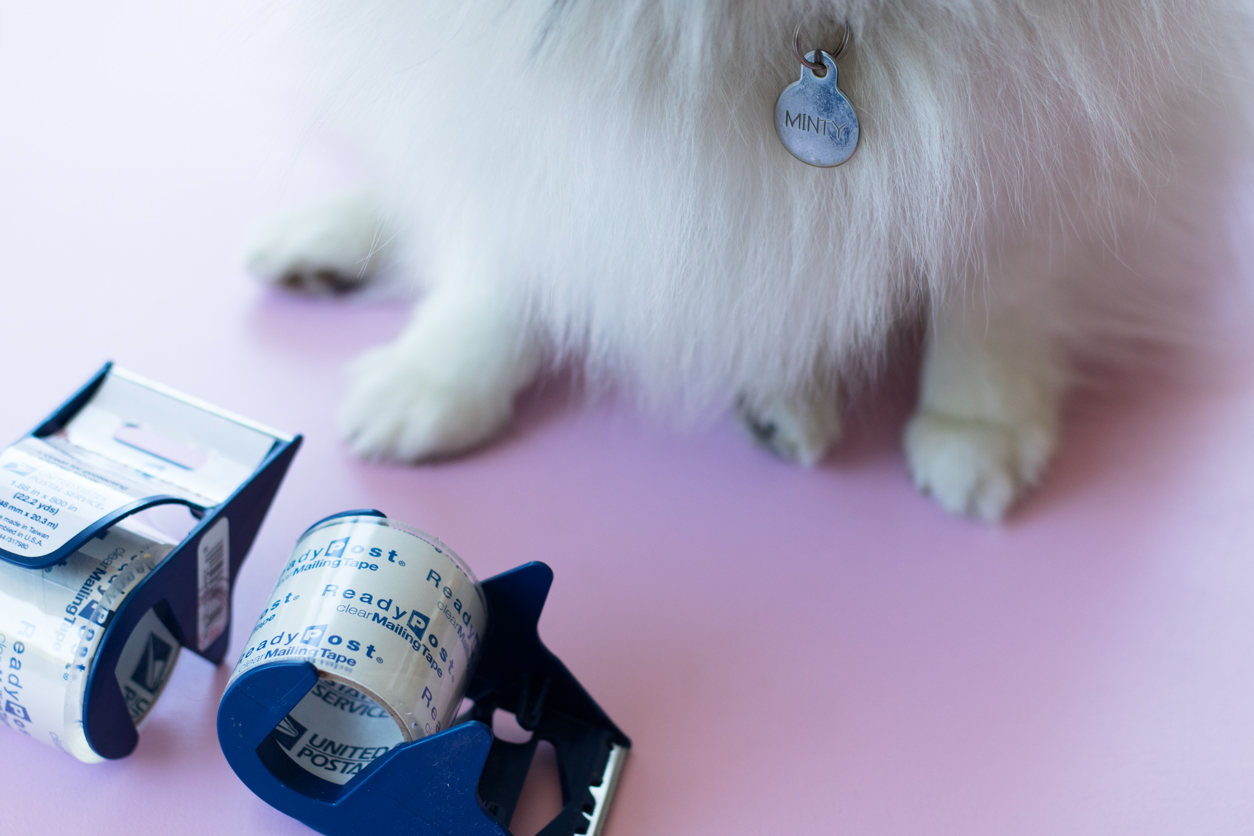 The Life Hack Every Dog Lover Needs to Know About_minty_joyfetti.com