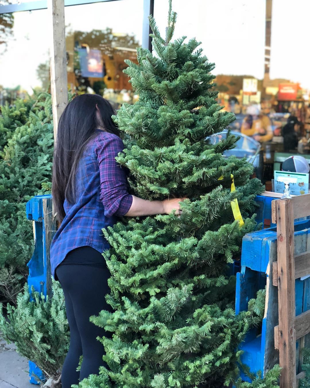 bear hug  we passed on the big Christmas treehellip